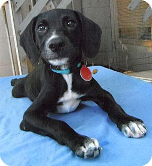 Terrier (Unknown Type, Small) Mix Puppy for adoption in Pittsburgh, Pennsylvania - Jamaica