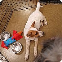 Adopt A Pet :: Goober - Rosemead, CA