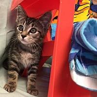 Adopt A Pet :: Amber- Fostered - Rustburg, VA