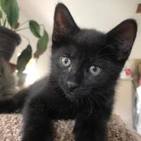 Adopt A Pet :: Charlie - Hanover, ON