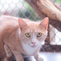 Adopt A Pet :: Abbott - New Freedom, PA