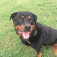 Adopt A Pet :: BRUNO MARS - Pasadena, CA