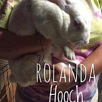 Adopt A Pet :: Rolanda Hooch - Elizabethtown, KY