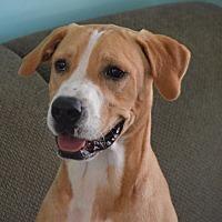Adopt A Pet :: Colt - Seabrook, NH