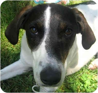 Hound (Unknown Type) Mix Dog for adoption in Jacksonville, Florida - River
