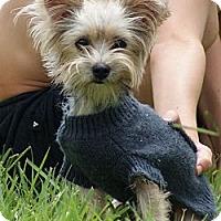 Adopt A Pet :: JASPER - CAPE CORAL, FL