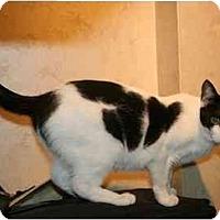 Adopt A Pet :: Holly - Jenkintown, PA
