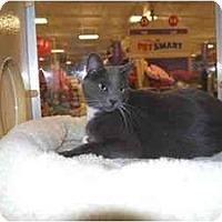 Adopt A Pet :: John - Modesto, CA