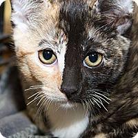 Adopt A Pet :: Sarah - Irvine, CA