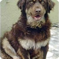 Adopt A Pet :: Taco - Albuquerque, NM