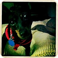 Adopt A Pet :: Marley - Madison, WI