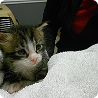 Adopt A Pet :: Clyde - Maywood, NJ