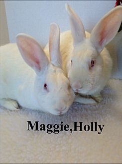 New Zealand Mix for adoption in Auburn, California - Maggie/Molly