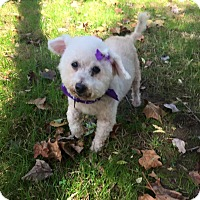 Adopt A Pet :: Lizzie - Wilmington, DE
