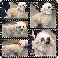 Adopt A Pet :: Toby - Mount Pleasant, SC