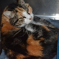 Adopt A Pet :: Peach - Cambridge, MD