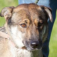 Adopt A Pet :: Delilah (and Sampson) - Harvard, IL