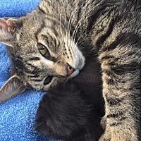 Adopt A Pet :: Victoria - Columbia, SC