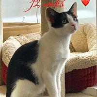 Adopt A Pet :: Peyton - Island Park, NY