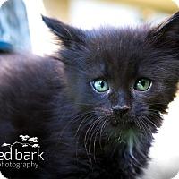 Adopt A Pet :: Cole - Vancouver, BC