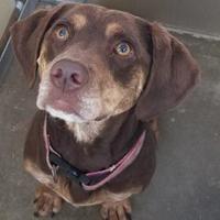 Adopt A Pet :: Coco - Columbiana, AL