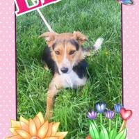 Adopt A Pet :: Ella - La Grande, OR