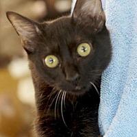 Adopt A Pet :: KACTUS - Ocala, FL