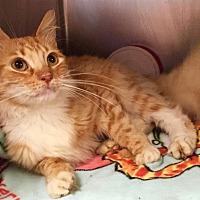 Adopt A Pet :: Samuel - Marlton, NJ