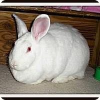 Adopt A Pet :: Duchess - Williston, FL