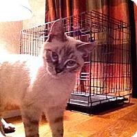 Adopt A Pet :: Tippy - Wenatchee, WA