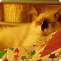 Adopt A Pet :: Mushu - Davis, CA