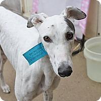 Adopt A Pet :: Jagger - Philadelphia, PA