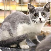 Adopt A Pet :: Little Joe - Sacramento, CA