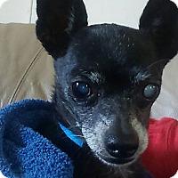 Adopt A Pet :: Arf - st peters, MO