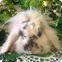 Adopt A Pet :: Myrtle - Paramount, CA