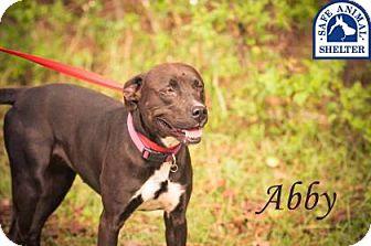 Bulldog/Retriever (Unknown Type) Mix Dog for adoption in Middleburg, Florida - Abby