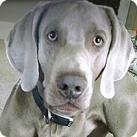 Adopt A Pet :: Casper - Grand Haven, MI