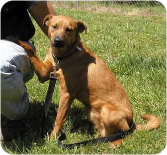 Terrier (Unknown Type, Small) Mix Dog for adoption in Graysville, Tennessee - Jimmy