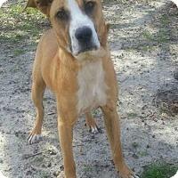 Adopt A Pet :: Victor - Arlington, VA