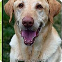 Adopt A Pet :: Tank - Ogden, UT