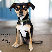 Adopt A Pet :: Chewy - West Los Angeles, CA