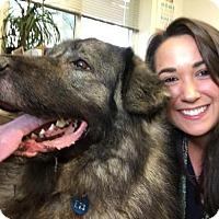Adopt A Pet :: Zeus (Sarplaninac) - Chambersburg, PA