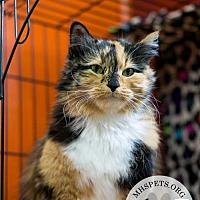 Adopt A Pet :: Coco - Lake City, MI