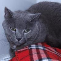 Adopt A Pet :: Stormy - Orleans, VT