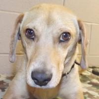 Adopt A Pet :: Willie - Oxford, MS