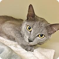 Adopt A Pet :: Pixie - cute as a button! - Salisbury, MA