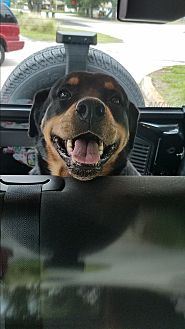 Rottweiler Dog for adoption in New Smyrna Beach, Florida - PENNY