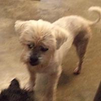 Adopt A Pet :: Sandy #1166X - Nixa, MO