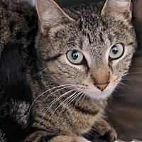 Adopt A Pet :: Joan - St Louis, MO