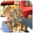 Photo 4 - American Pit Bull Terrier Mix Puppy for adoption in Detroit, Michigan - Moe-Pending